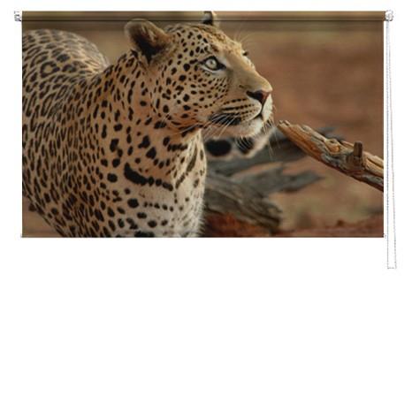 Leopard printed blind
