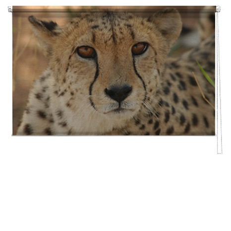 Cheetah printed blind