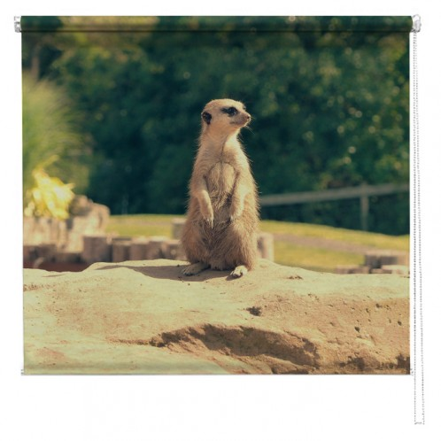 Meerkat animal printed blind