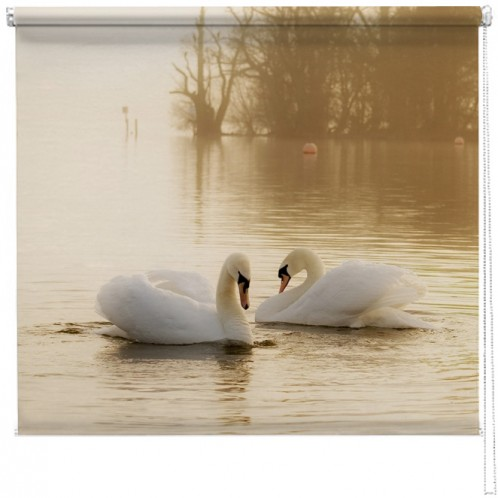 White Swans blind