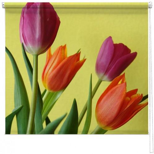 Tulips blind