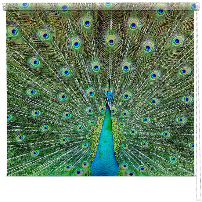 Proud Peacock Printed Blind Picture Printed Blinds At