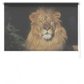 Lion 2 printed blind