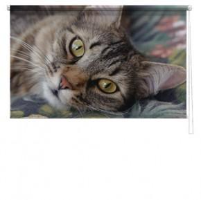 Cat printed blind