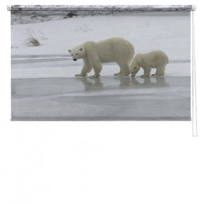 Polar bear printed blind