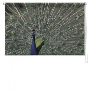 Peacock printed blind