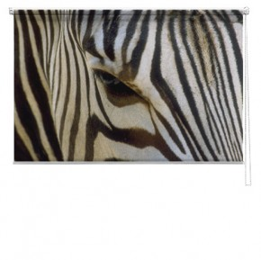 Zebra printed blind