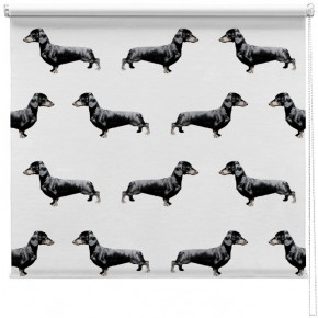 Duchstund Sausage dog blind