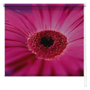 Pink Gerbera flower printed blind