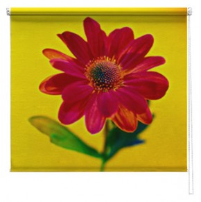 Red Flower printed blind