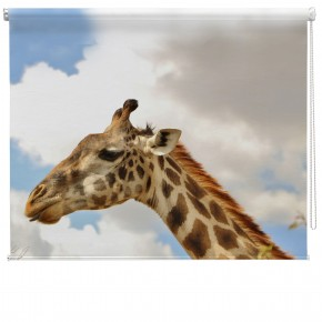 Giraffes Head printed blind
