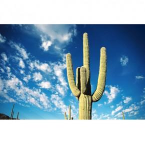 Cactus canvas art