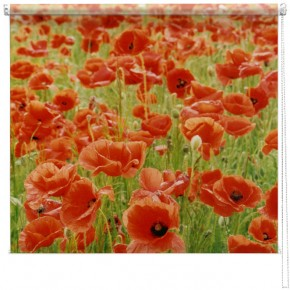 Poppy field blind