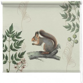 Vintage squirrel illustration blind