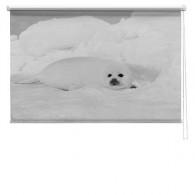 polar bear printed blind