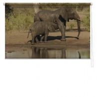 Elephant printed blind