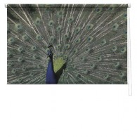 Peacock printed blind