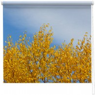 Autumn Gold Tree printed blind