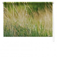 Grass picture printed blind