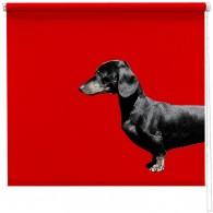 sausage dog blind