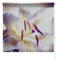Lilly Flower printed blind