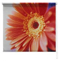 Gerbera flower printed blind
