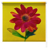 Red Flower printed blind
