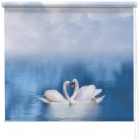 Swans in love printed blind
