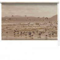 Sea birds printed blind