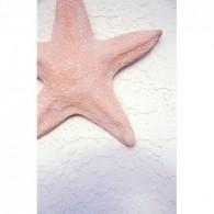 starfish canvas art