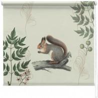 Vintage squirrel illustration blind