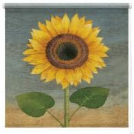 Sunflower printed blind martin wiscombe
