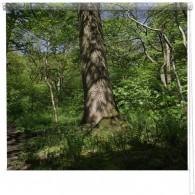 Woodland tree blind