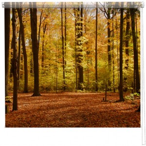 Autumn Forest Woodland picture printed blind