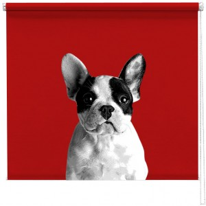 French bulldog sized printed blind