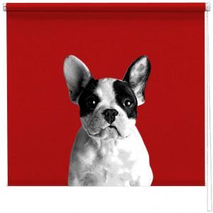 French bulldog sized printed blind