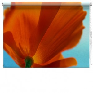 Poppy flower printed blind