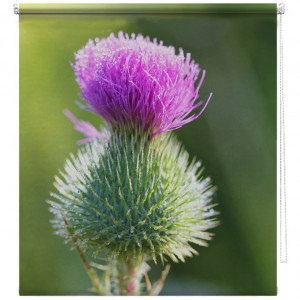 Thistle flower printed blind