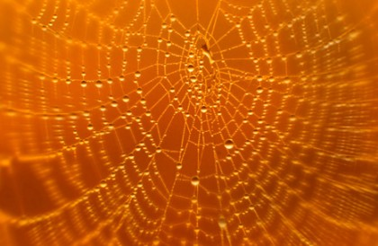 Spiders web printed blind