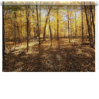 Forest Woodland picture printed blind
