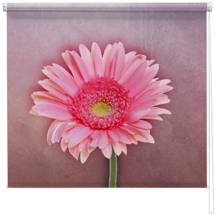 Hazy Gerbera flower printed blind