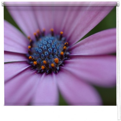 Lilac Gerbera flower printed blind