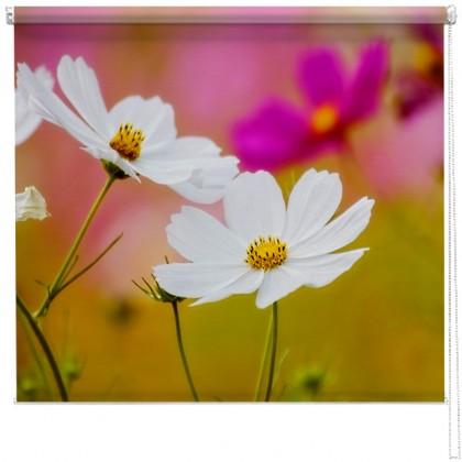 Flower Meadow printed blind