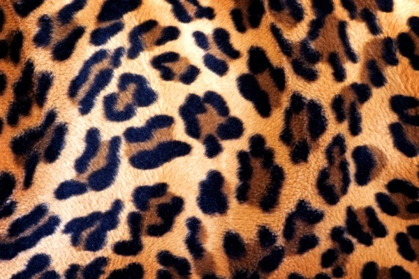 Leopard Printed Blind Picture Printed Blinds At Artylicious