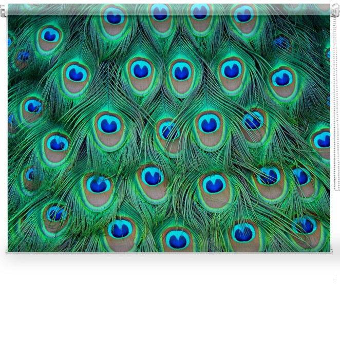 Peacock Feathers Printed Blind Picture Printed Blinds At