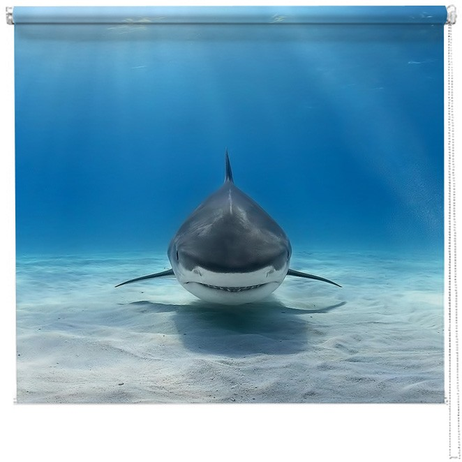 Great White Shark Blind Picture Printed Blinds At